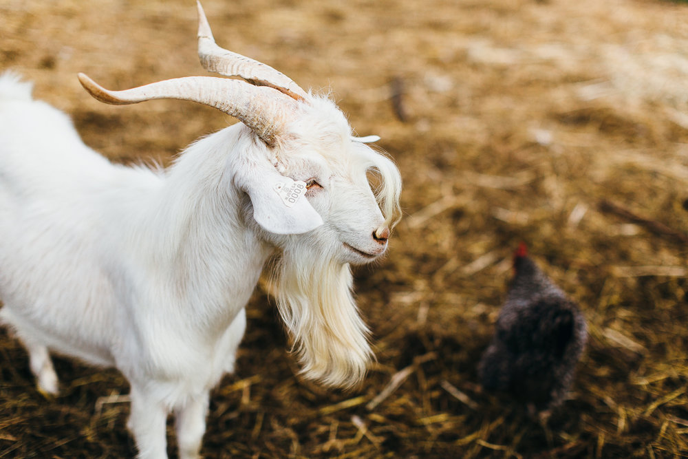 inn-at-fernbrook-farms-wedding-emily-kirke-photography (13 of 14).jpg