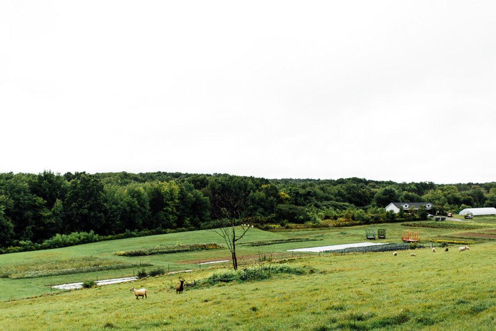 liberty-farms-hudson-flowerkraut-wedding-emily-kirke-photography (36 of 161).jpg