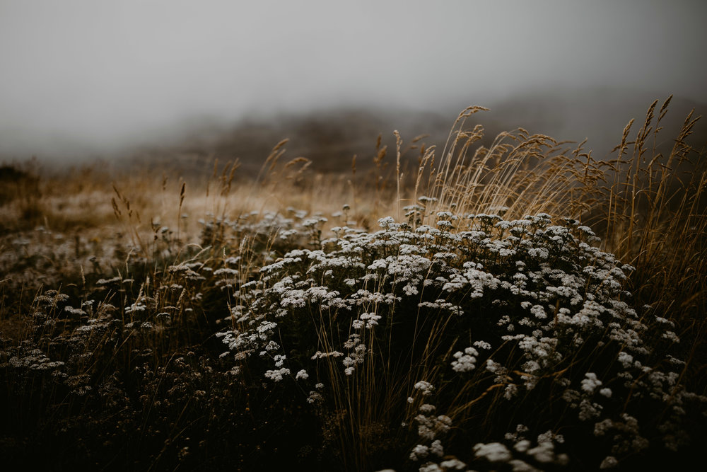 NewZealand-TheHurstsandCo-2017-3 (14 of 158).jpg