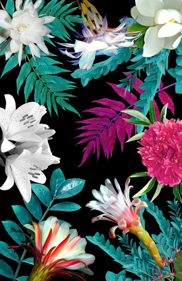 crooks-lovers :     Floral Botanic by Karen Hofstetter