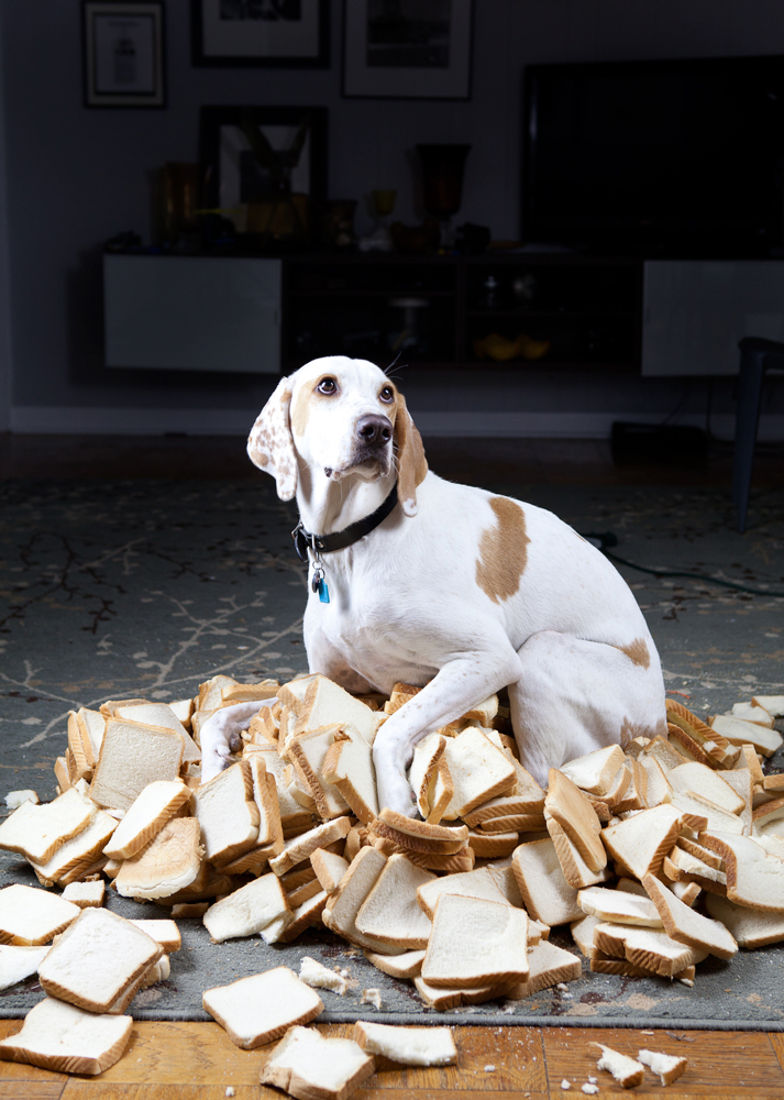thecamhouston: Above: Hillerbrand+Magsamen, Cerberus, House/Hold Series, 2012. Archival pigment print, 28 x 20 inches. Courtesy the artist and Darke Gallery, Houston. Support CAMH by purchasing the print on our online auction website! Click here for details. No dog shaming caption necessary.