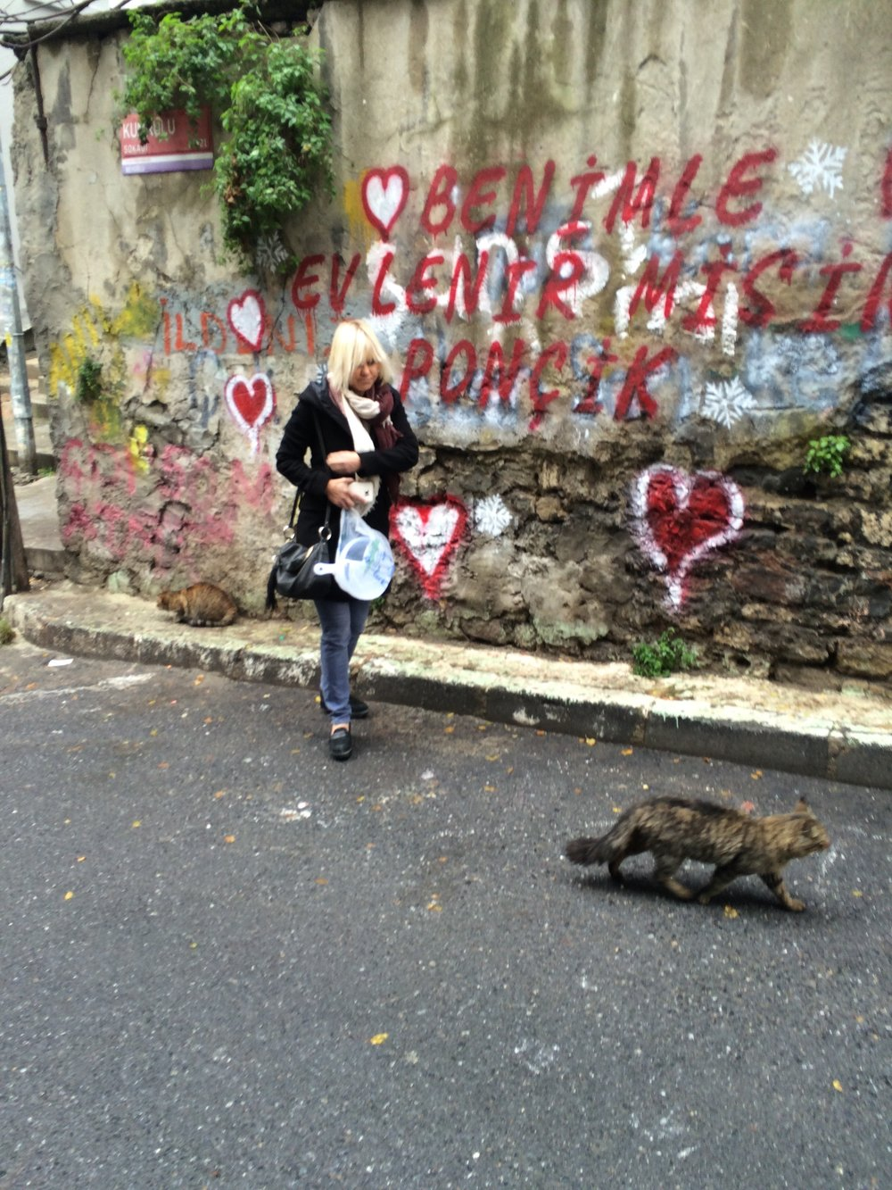 Istanbul City of Cats.