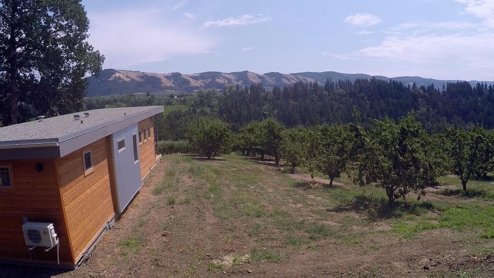orchard 38756328182.jpeg