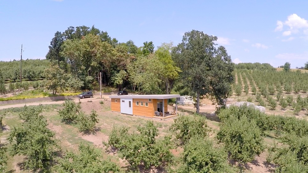 orchard 38756264746.jpeg