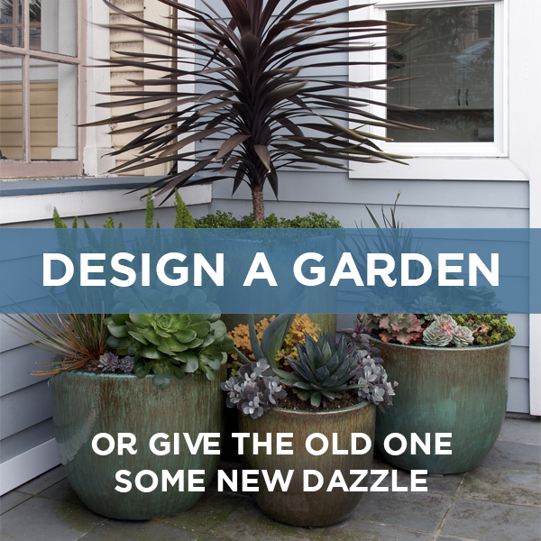 We offer a few different types of design services to help you build your dream garden.  Click for more information.