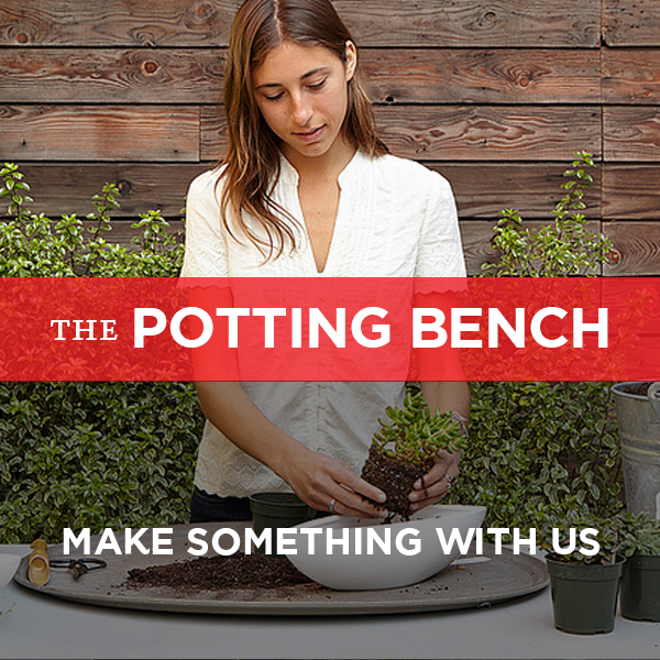 Come make something beautiful at our Potting Bench!  Do it yourself (with a little help if you need it), we'll do it for you, or bring a group for a planting party.