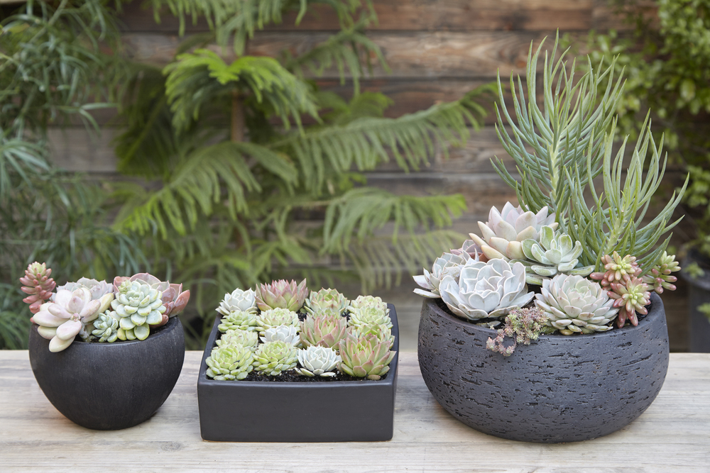 Flora Grubb Gardens Potting Bench Succulents.jpg