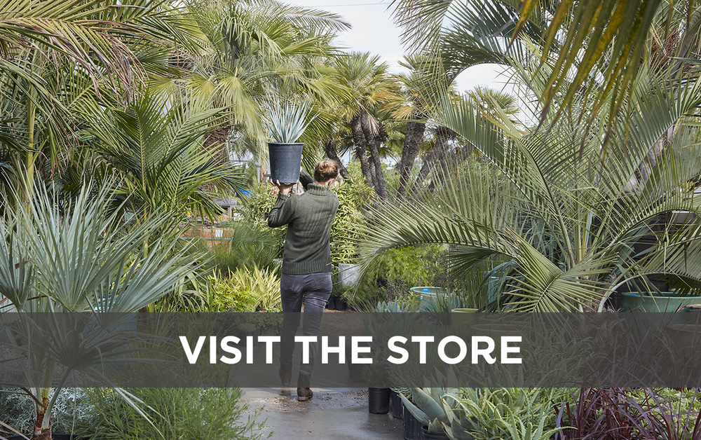 Visit the store! People tell us our store is the most beautiful garden store they've ever visited.