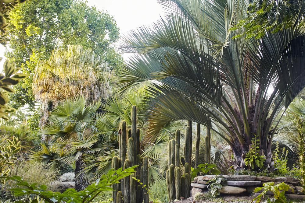 Designing with Palms Flora Grubb Gardens Jason Dewees