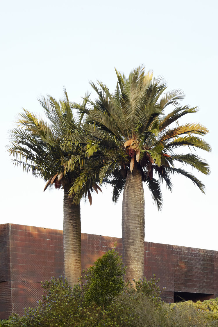 Palms Sold by Flora Grubb Gardens