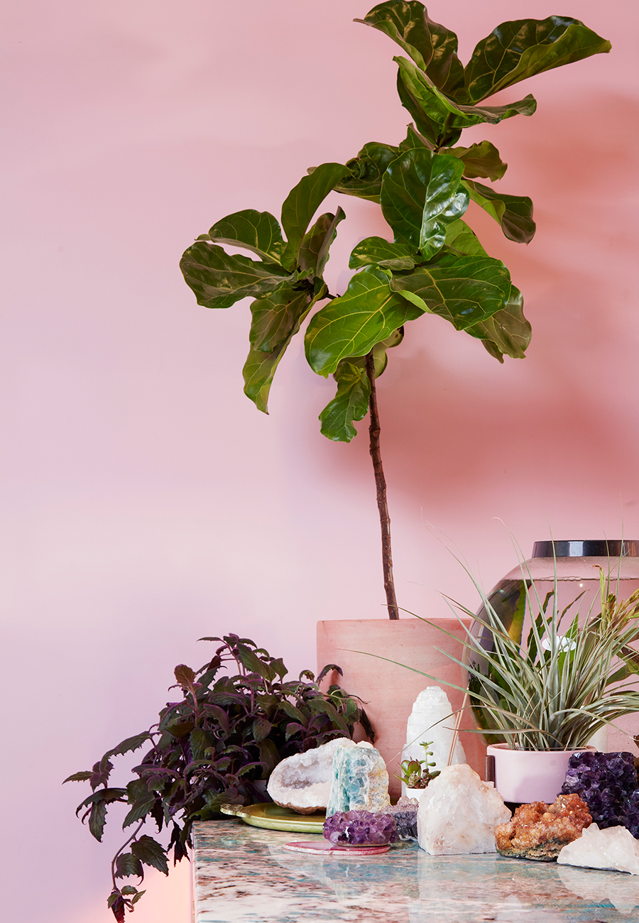 Flora-Grubb-Gardens-Mister-Jius-Fiddle-Leaf-Fig.jpg