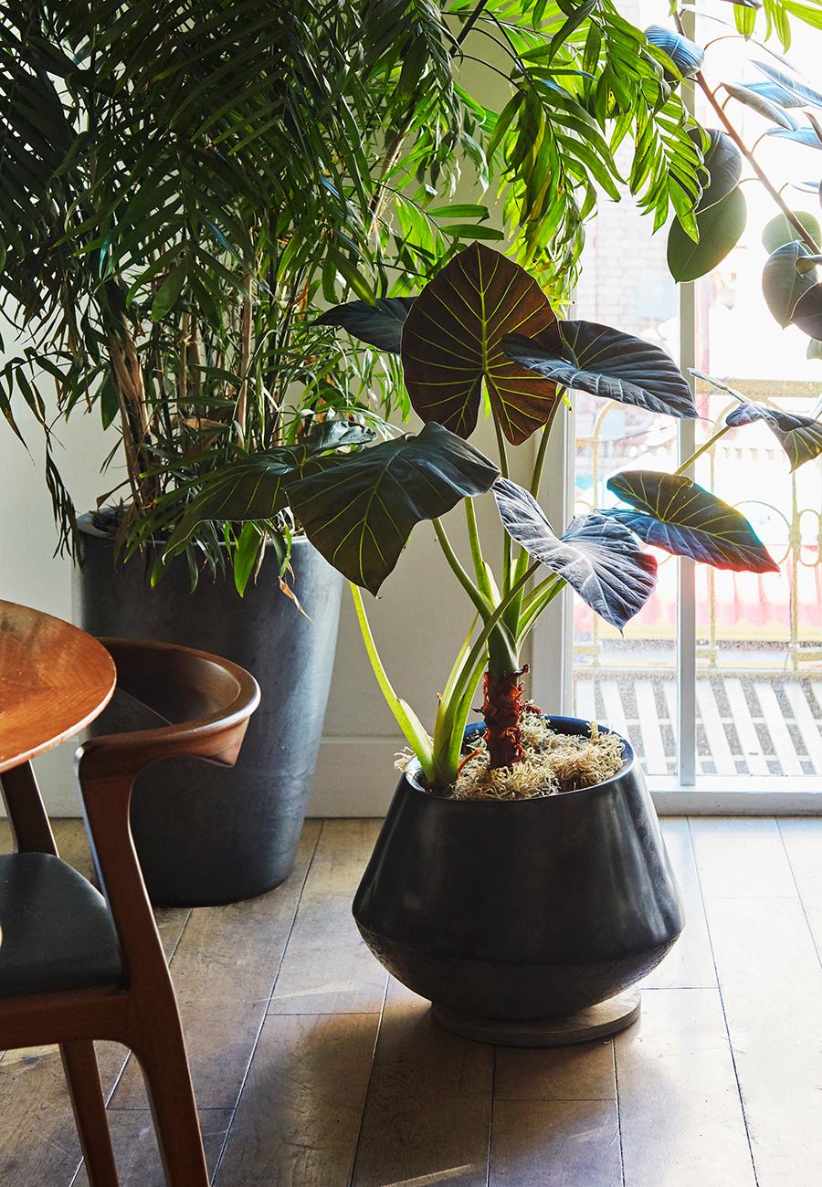 Flora Grubb Gardens Mister Juis Houseplants in Corner.jpg