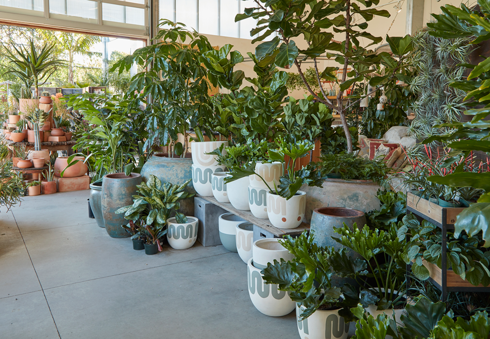 Flora Grubb Gardens Houseplant Indoor Plant Love.png