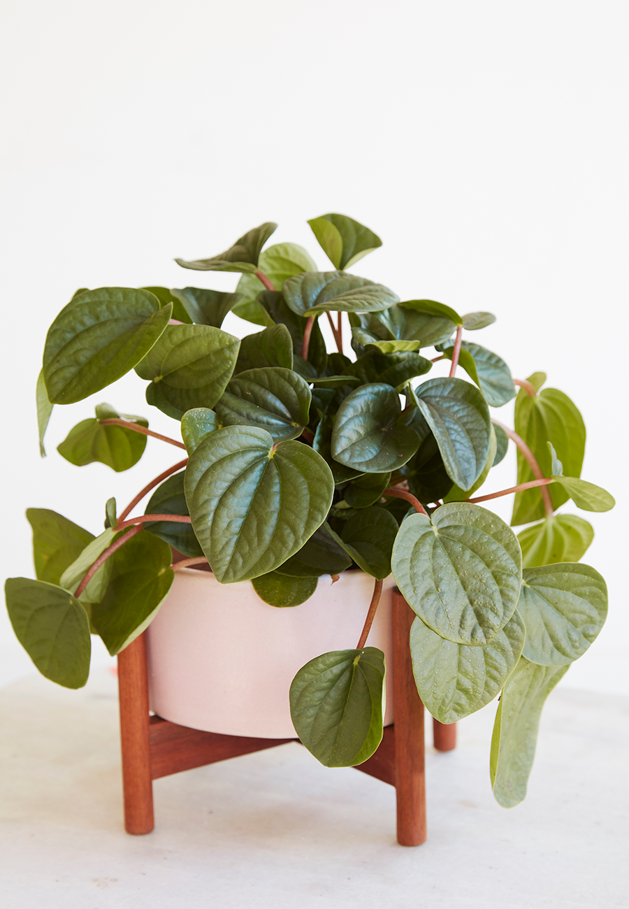 Flora Grubb Gardens Pink Case Study Planter and Plant.png