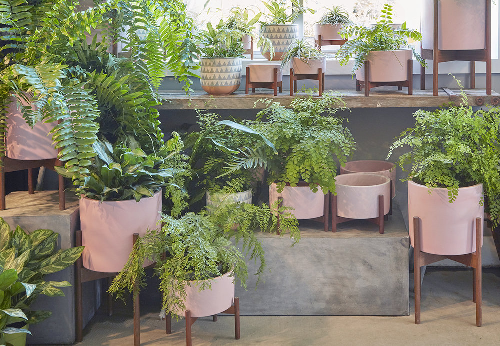 Flora Grubb Gardens Pink Case Study Pots and Fern Houseplants Display.jpg