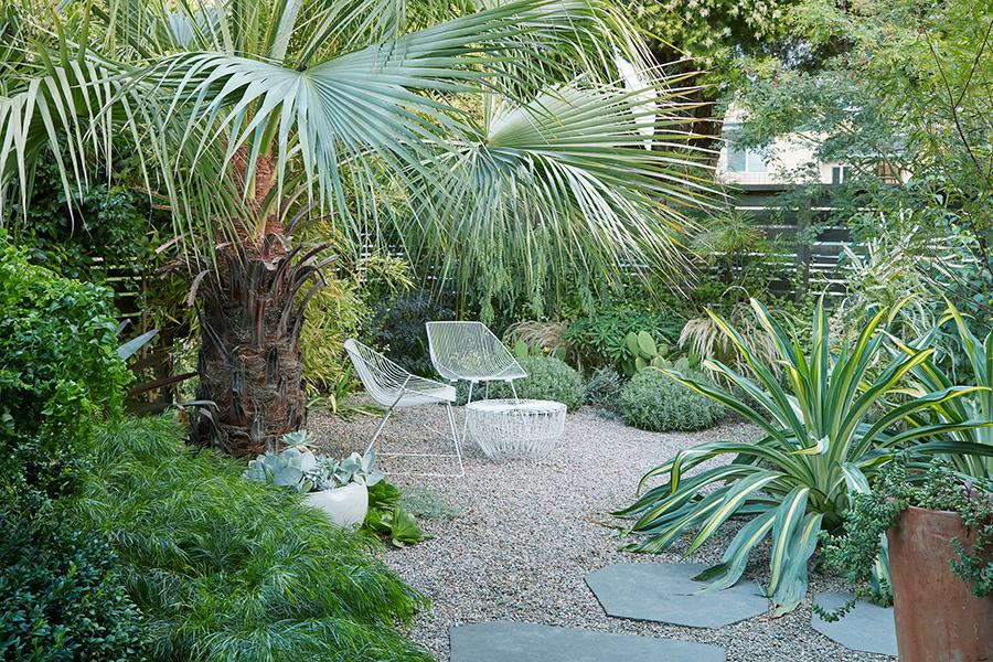 Flora Grubb Gardens Acacia Cognata Cousin Itt.png