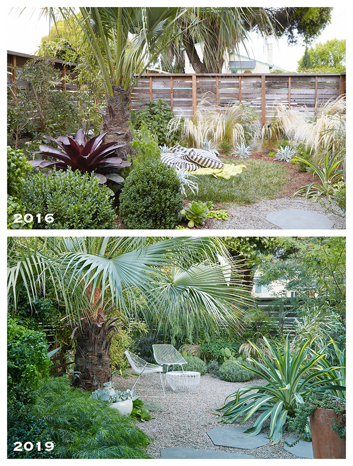 Flora Grubb Berkeley Garden Before and After.png