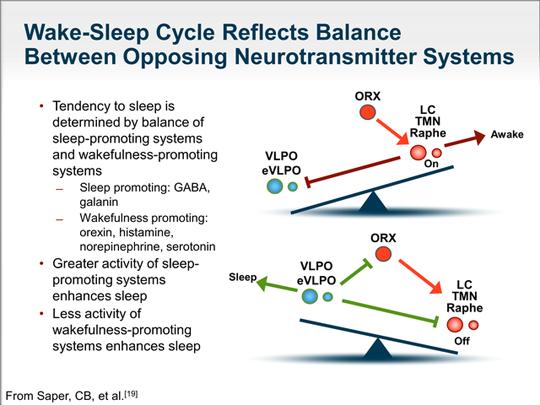 Sleep wake cycle olivia arezzolo sleep specialist
