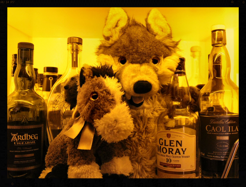 After too much Glen Moray Hitch appears to be feeling a little horse.....