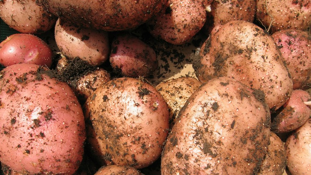 potatoes-533577_1920.jpg