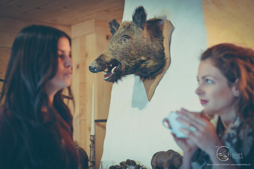 Elynn the Green Session - wall-mounted bear taxidermy