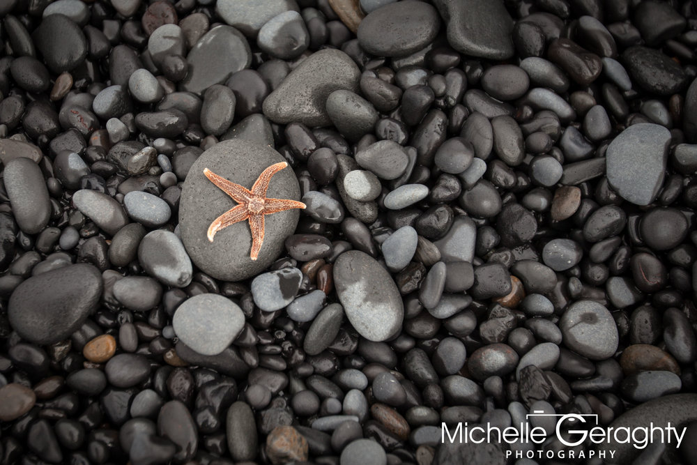 Starfish on Reynisfjara Black Sand Beach, Iceland