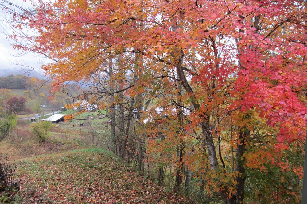 Bee Branch Farm Autumn Barns.jpg