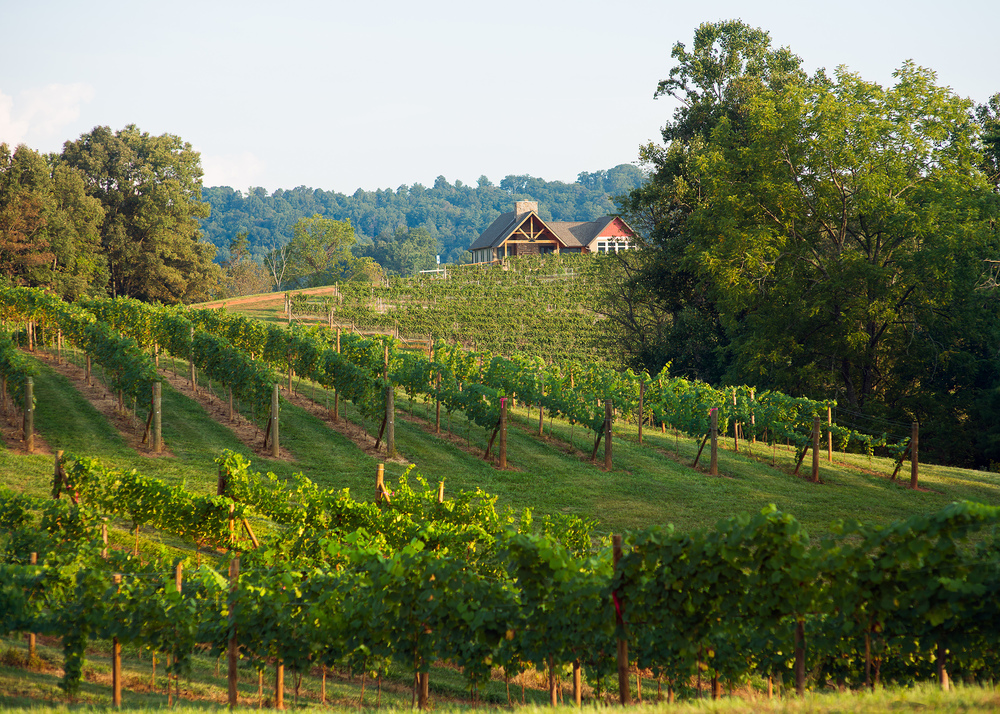 Addison Farms Vineyards