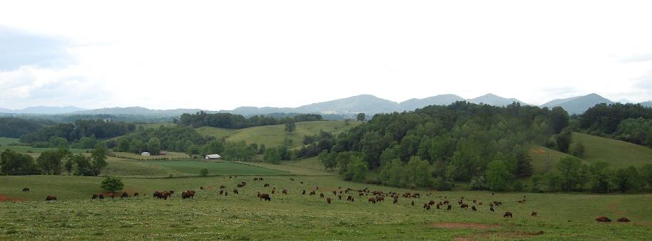 bisonlandscape.jpg