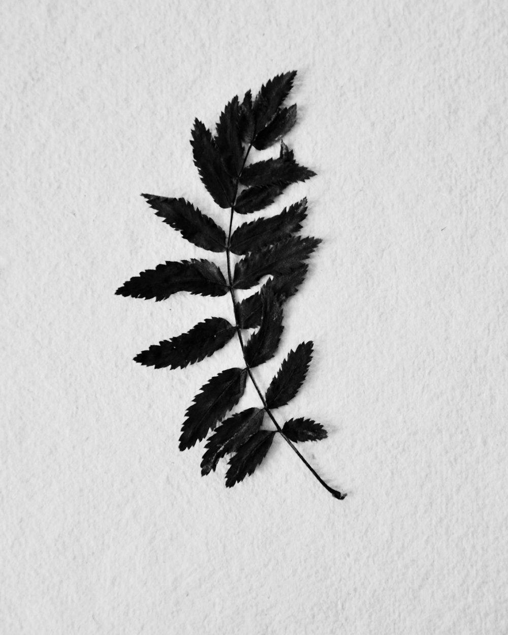 getrocknetes Blatt arctic plants.jpg