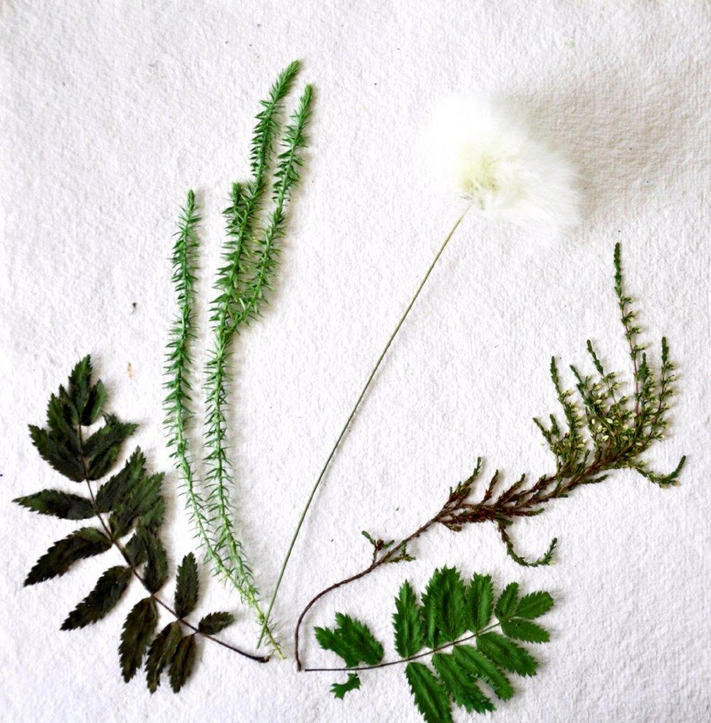 Plantflower