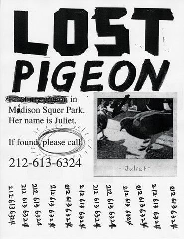 14_lost-pigeon-flier600px.jpeg
