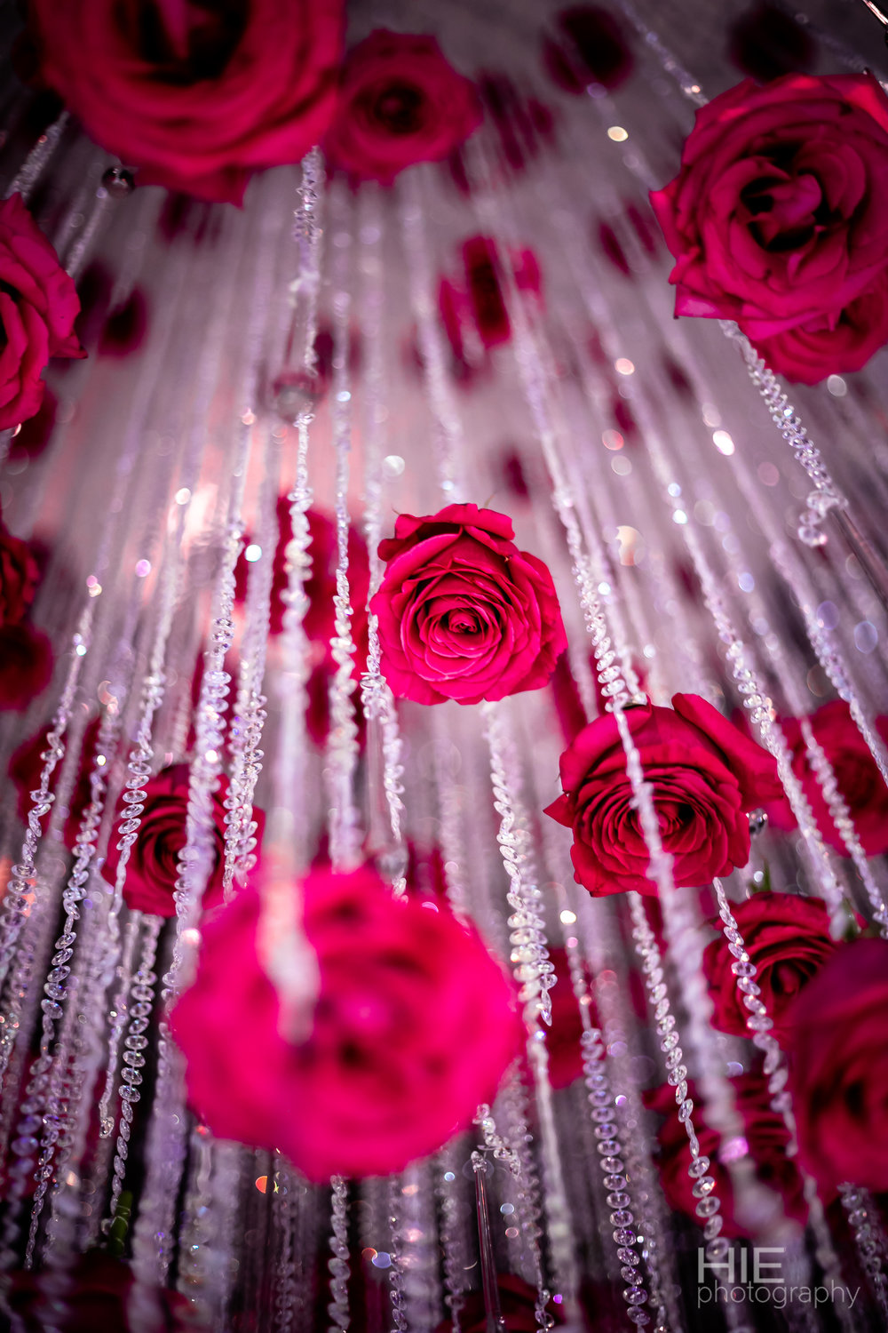 Waterfall of roses