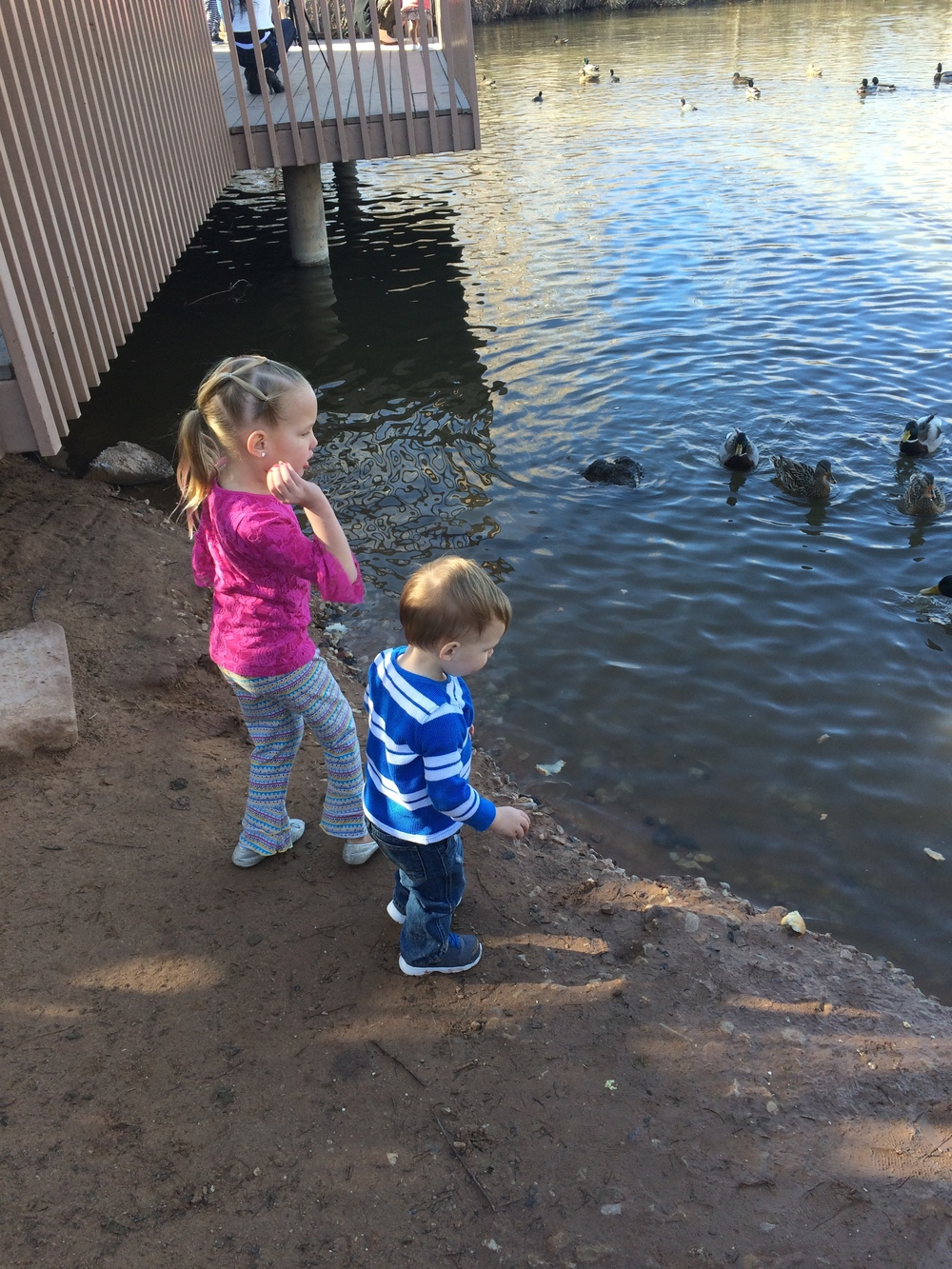 Feeding the ducks - January 23rd