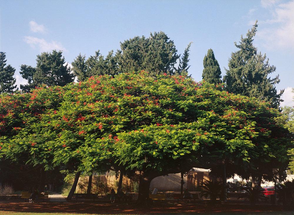 jenny_tree.jpg