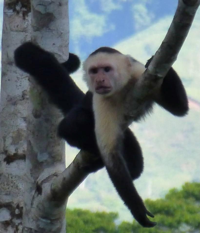 Iconic Monkey (2).jpg