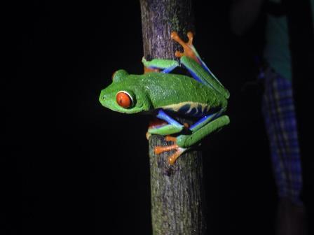tree frog web pic.jpg