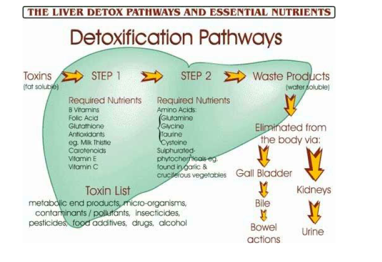 Image result for liver pathway chart hormones