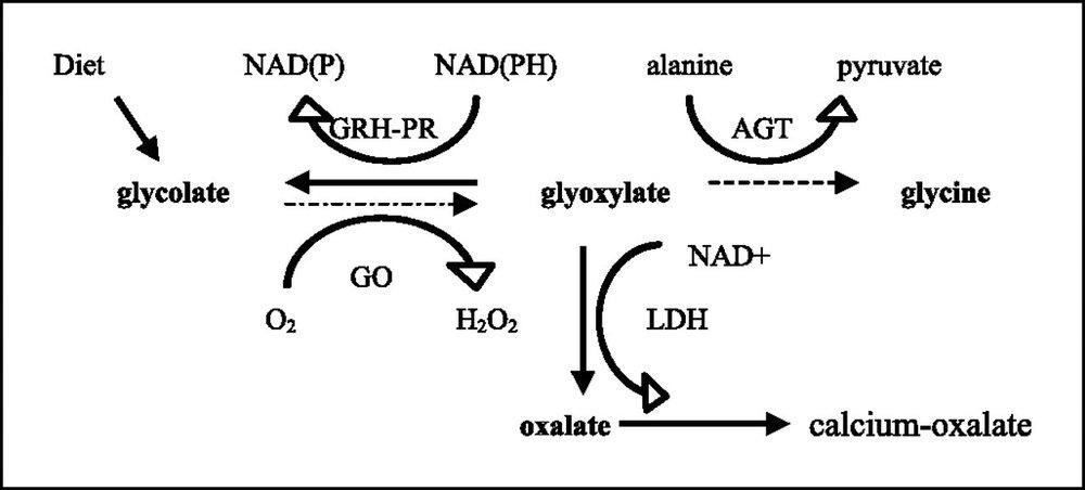 Figure 1 - Oxalate Pathway