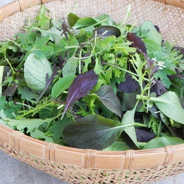 Wild & Mild Salad Mix - Pond Creek Gardens