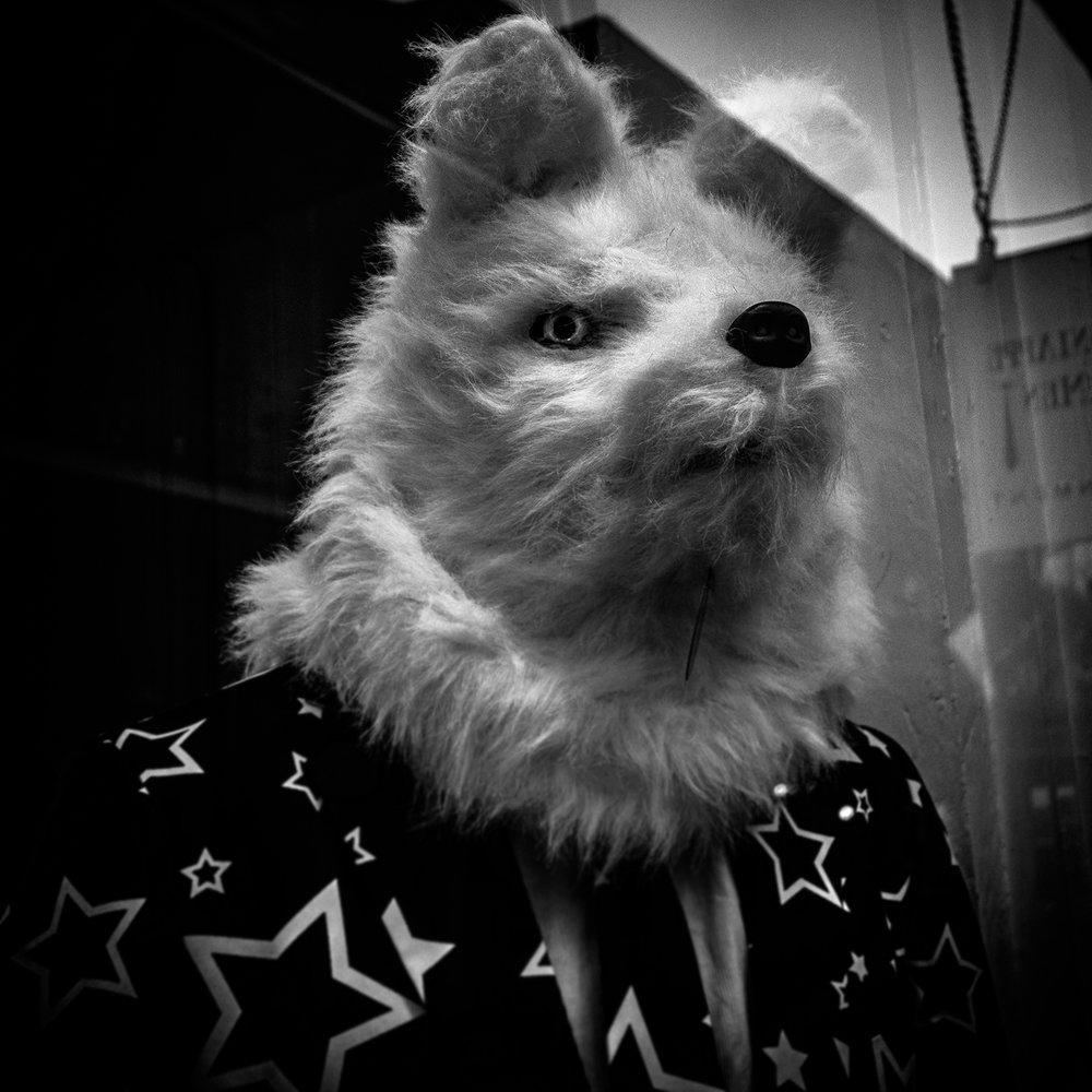 Wolf-in-Star-Suit-BW-WEB-DSC09701.jpg