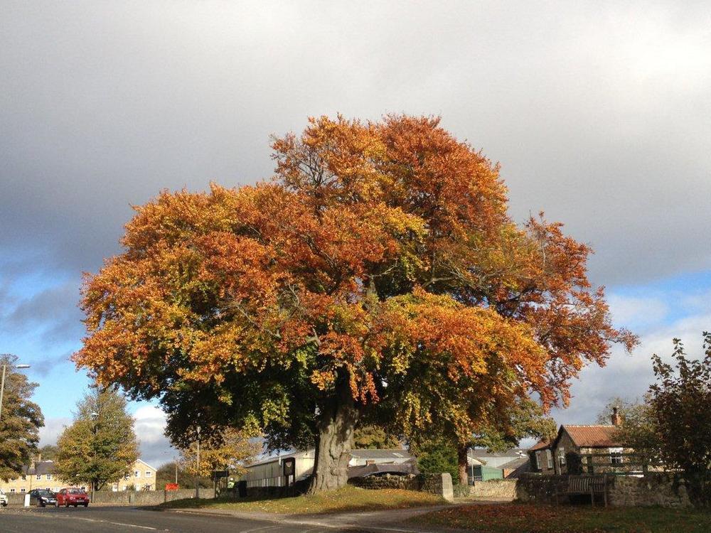 Autumn skies in Tanfield.jpg