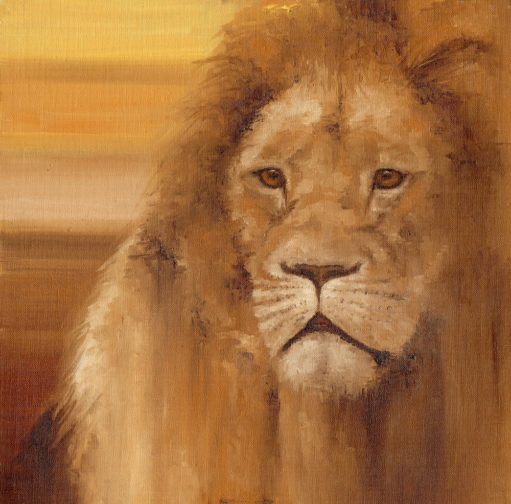 A Lion in oils.
