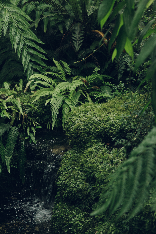 Haarkon Green Nature Plant Edinburgh River Waterfall