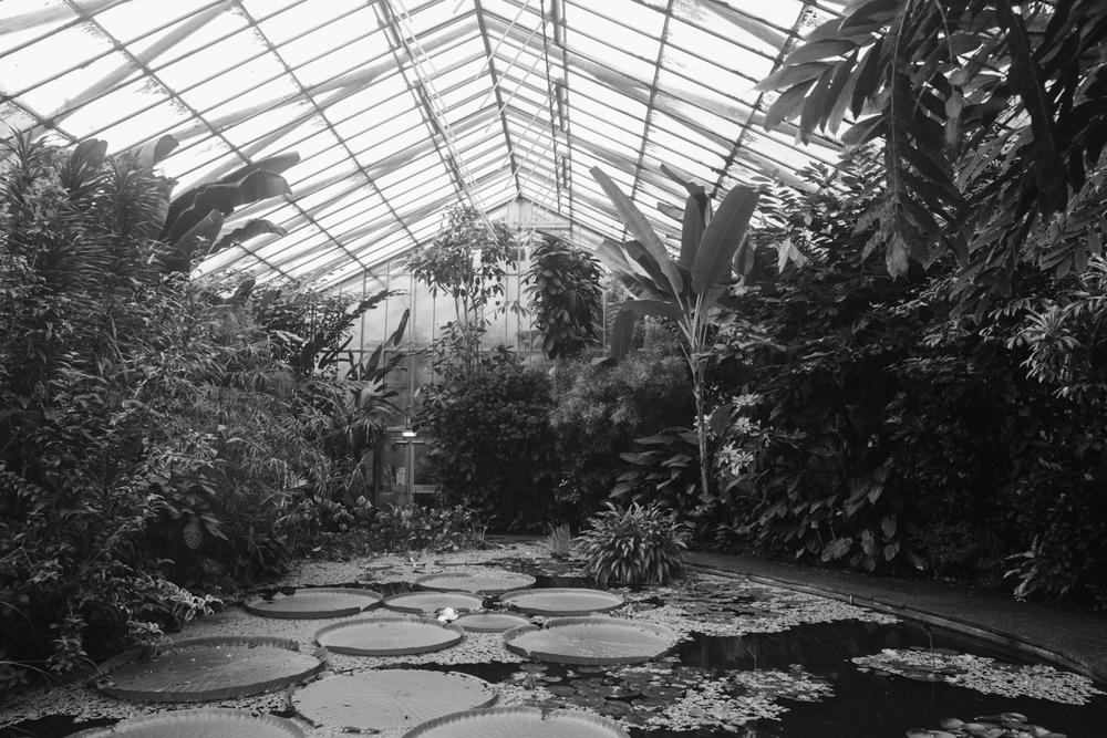 Haarkon Glasshouse Pond Lily Pad