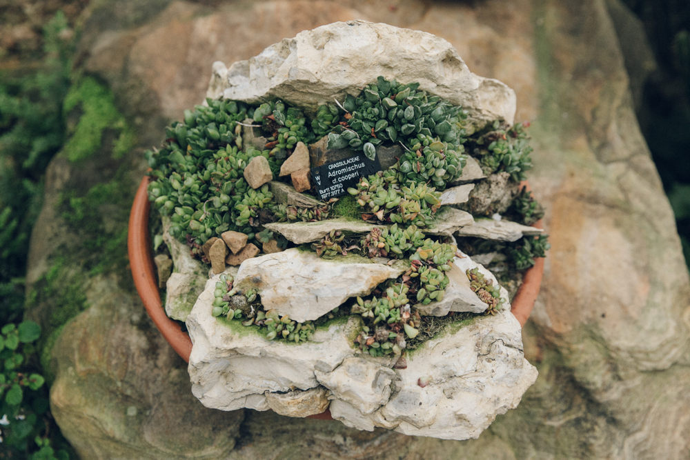 Haarkon Cactus Succulent Bowl Sedum Lithops Rockery