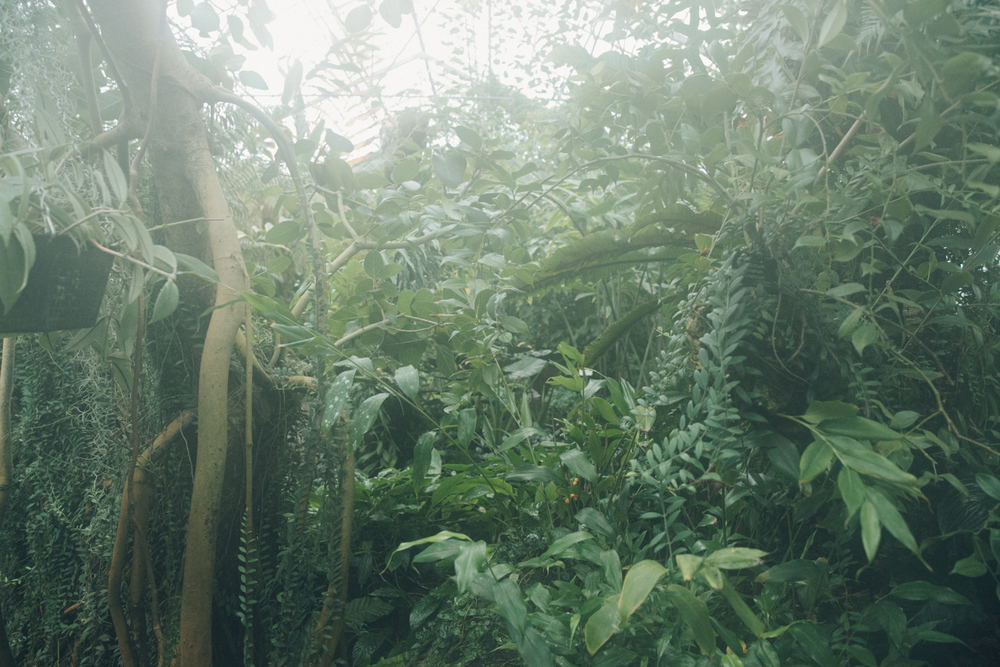 Haarkon Foliage Green Edinburgh Botanical Garden