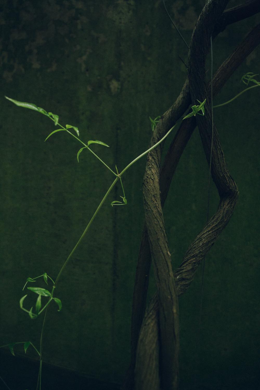 Haarkon Vine Leaf Nature Plant Edinburgh Concrete Moss