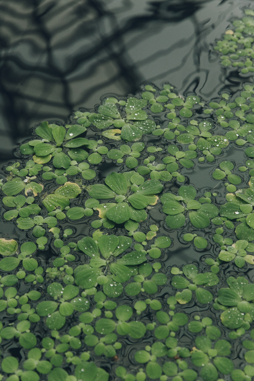 Haarkon Green Pond Glasshouse Reflection Dew Drop