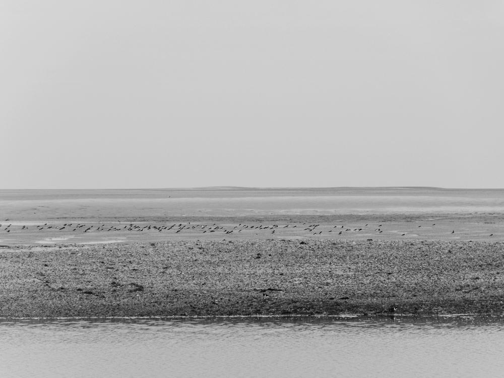 Haarkon Norfolk Bird Beach Sand